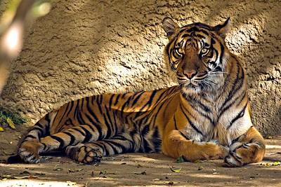 Los Angeles Zoo, Los Angeles, CA.
