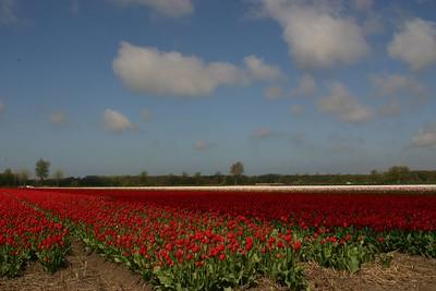 Entre Haarlem et Delft - 4