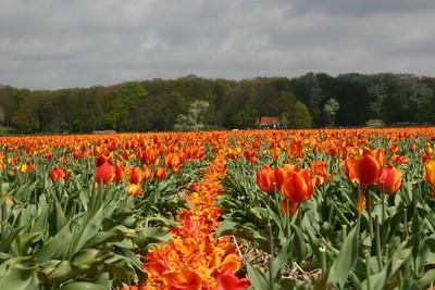 Entre Haarlem et Delft - 3