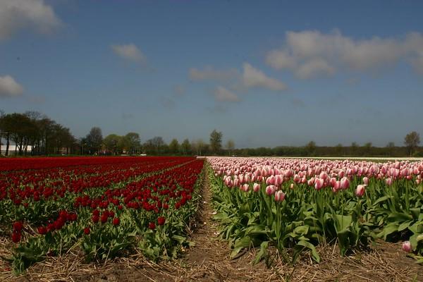 Entre Haarlem et Delft - 7