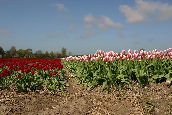 Entre Haarlem et Delft - 8