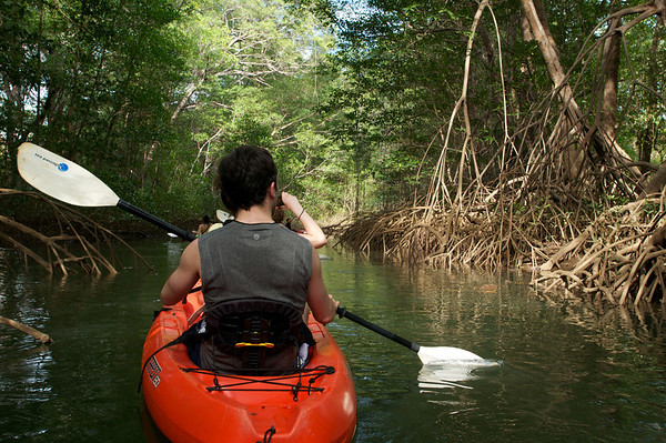 Aaron and Alana venture into the mangrove forests - a very Apocalypse Now feeling