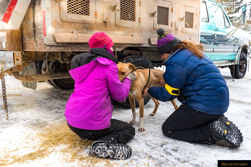 Rachel has an 8 year competition history. She started learning the art of sled dog racing as a child with a harness and a husky who needed an outlet for his energy. This week she competing with her 10 dog team.