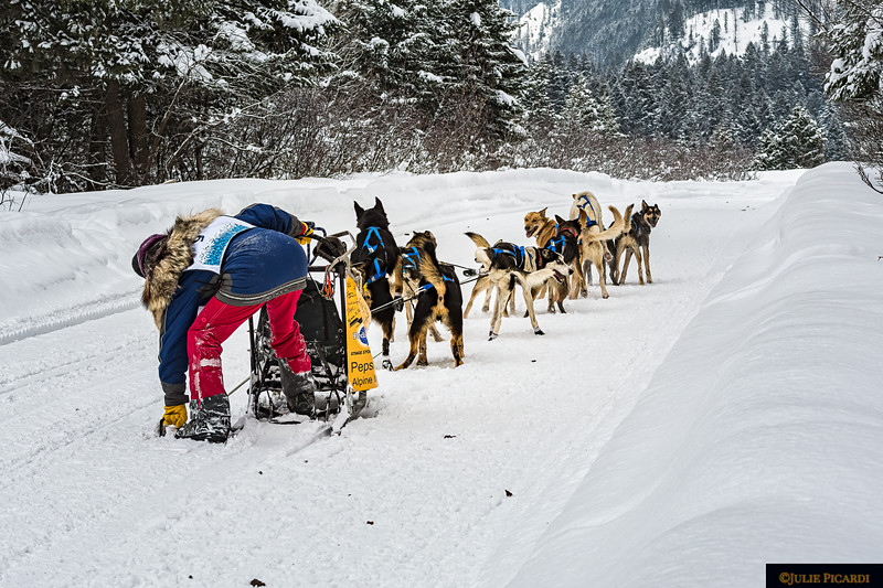 This musher has stopped to fix something amiss. Observe the lead dog. He is watching intently for the signal to start the team again as the musher releases the brake.
