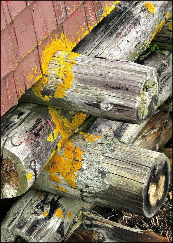 Aged beams under building in Peggy's Cove, Nova Scotia