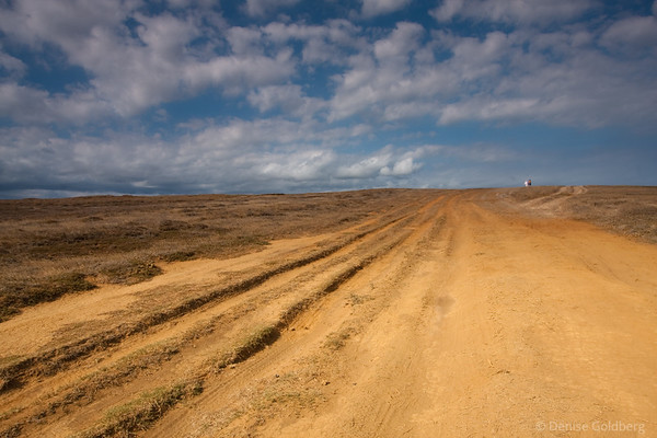 dirt track stretching onward, to the green sand beach, big island, hawaii