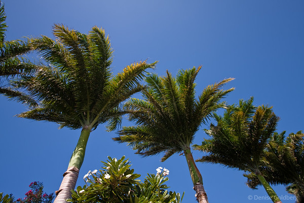the wind in the palm trees