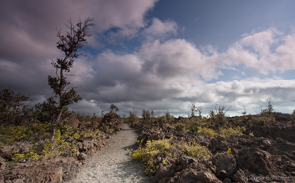 alond the Ka'u Desert trail, hawaii volcanoes national park