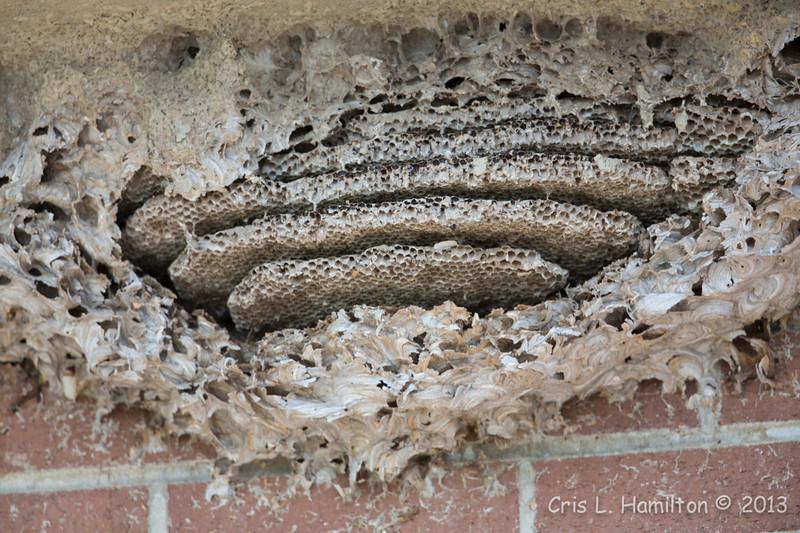 Nest bee?-5918