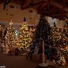 BC Christmas Trees-7037