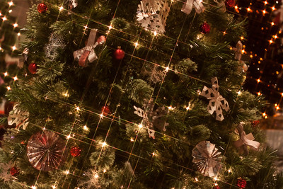 BC Christmas Trees-6935