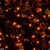 BC Christmas Trees-7039