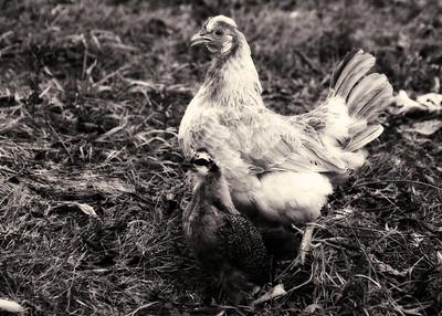 1302 Lavendar Farm