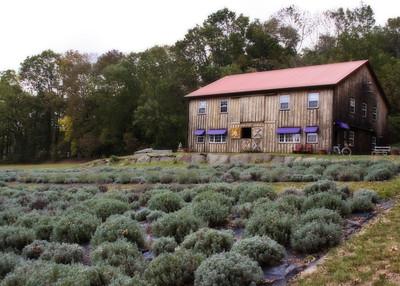 1297 Lavendar Farm 1
