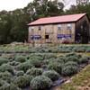 1297 Lavendar Farm