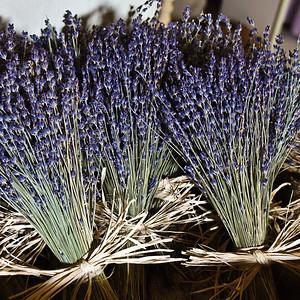 PA-Bucks-Peace Valley Lavender Farm Photos