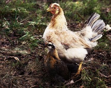 1302 Lavendar Farm 1