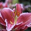 Longwood Gardens-5184
