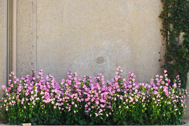 Longwood Gardens-5272