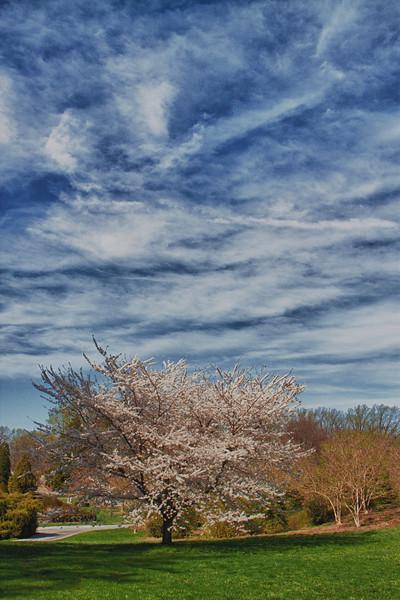 Longwood Gardens-5516_HDR