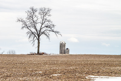 Lone Tree by the Silo
