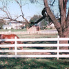 Horse - Amish Farm and House - Lancaster, PA  10-20-98