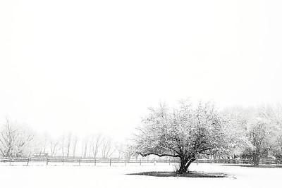 Ambler Snow-1753