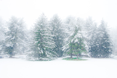 Ambler Snow-1759