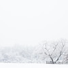 Ambler Snow-1740
