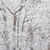Ambler Snow-1743