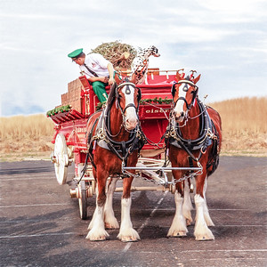 PA-Montco-Clydesdales in Ambler