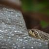 Snake at Elmwood Zoo Park in Norristown, PA