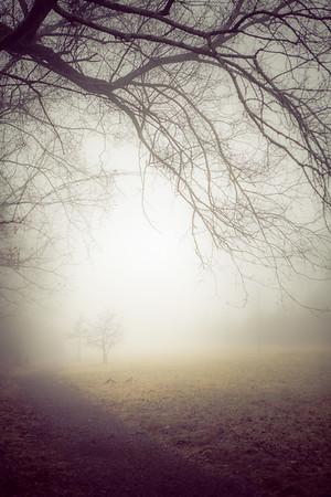 In a Fog at Trewellyn Preserve