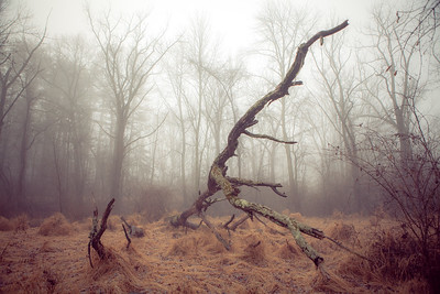 The Old Tree at Trewellyn Preserve