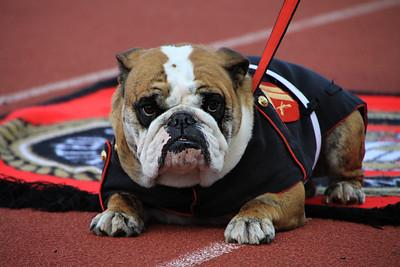 The Marine Corp mascot.