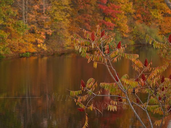Sumac beside Lake Nockamixon in fall