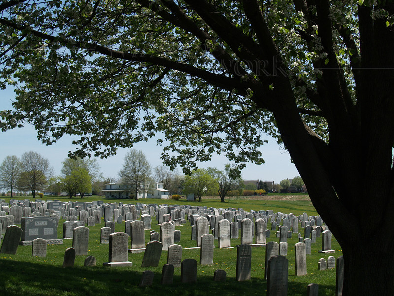 Salford Mennonite Church Cemetery, with the old pear tree standing by