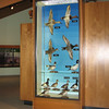 Middle Creek Wildlife Area Visitor Center Display of Waterfowl