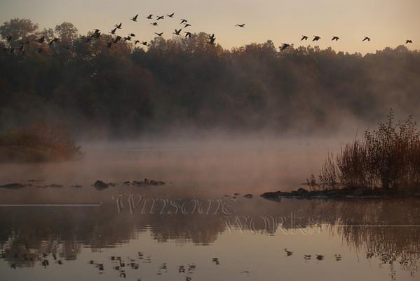 (48)  Geese in Marsh, Heller Rd. Quakertown