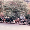 Carriage Rides in Front of Independence Hall - Philadelphia, PA - 10/15/85