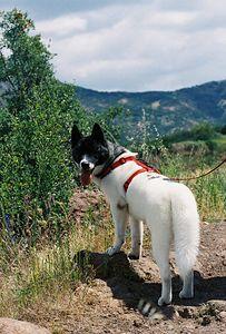 5/7/05 Pentachaeta Trail