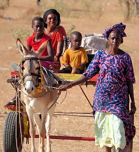 Family Transport Rural Senegal