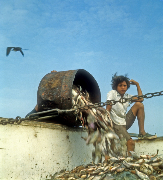 Catch of the Day,  this boy is in the truck to keep the frigate birds from stealing the fish.