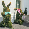 White House Easter Bunnies, Washington DC.