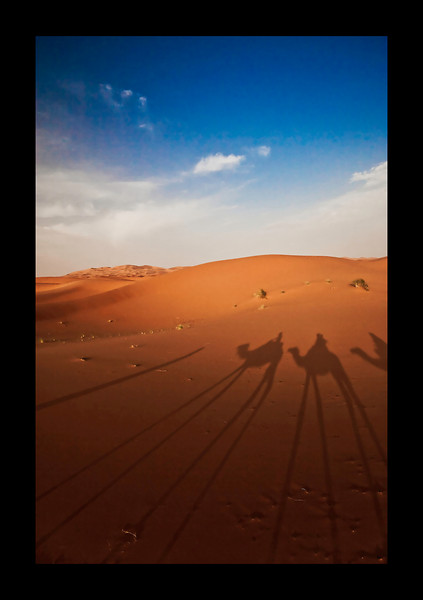 shooting camels from the camel ride
