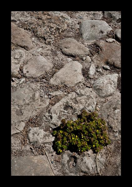 Green vs Gray - Volubilis - Roman Ruins