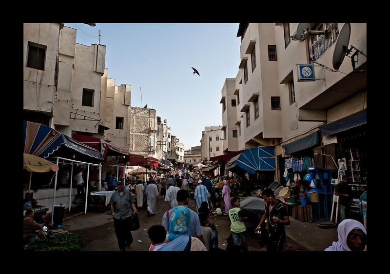 Fez - Medina. hawk circling overhead.