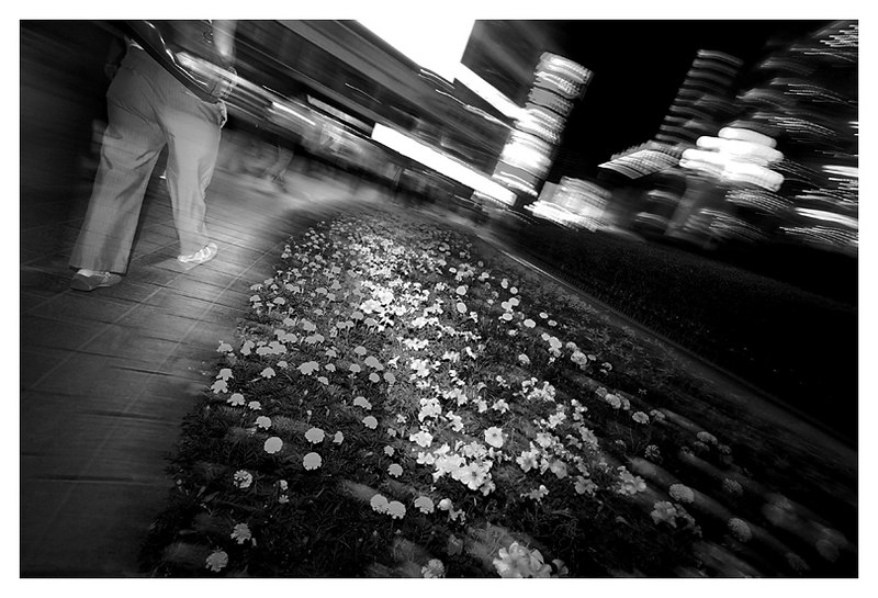 Walking with Flowers & Light, Chongqing, China - 2006
