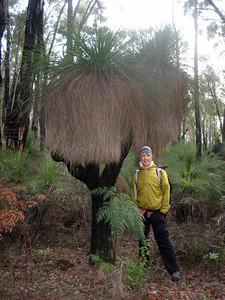 Double headed grass tree (balga)