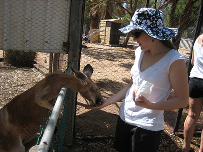 Feeding the Kangaroos at Greenough wildlife park (all the animals here are rescued orphans)